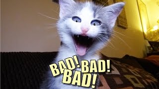 Download Talking Kitty Cat 44 - BAD! BAD! BAD! Video