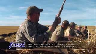 Download ″White-Fronted Geese″ Video
