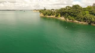 Download Orca Swimming Around Whangaparaoa Coastline Video