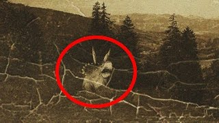 Download 5 Most Mysterious Prehistoric Animals Spotted Alive Today Video