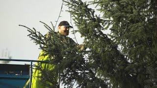 Download Municipal versus home Christmas light strings. Video
