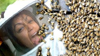 Download 10,000 BEES ATTACK BEEKEEPER LIZA KOSHY Video