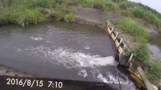 Download バス釣り ここにもバスが居た!茨城県 霞ヶ浦水系 小野川上流 Video