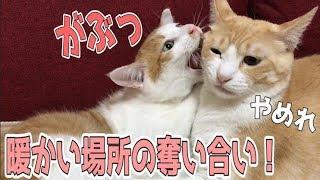 Download 猫に電気毛布を買ってあげたらいきなり縄張り争い勃発?! Video