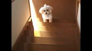 Download 階段の下からおはようのシッポがブンブン。 Video