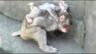 Download Baby Monkey Video:Baby Animal Video Video