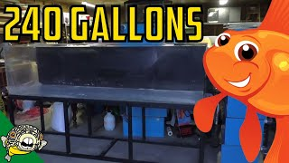 Download 240 Gallon tank! 8x2x2 for Goldfish! Daily Dose #14 Video