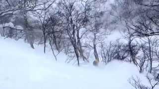 Download Nature[STYLE] Hokkaido - Day 1 - Annupuri Video