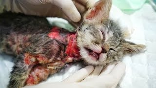 Download ABUSED KITTY BOILED ALIVE. HELP US SAVE CHICO!! Video