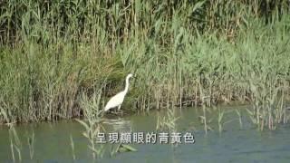 Download 社子島QRcode影片 水鳥篇 Video