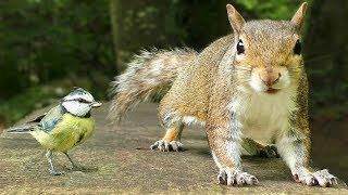 Download Videos Para Gatos - Pequeños Pájaros y Ardillas Video