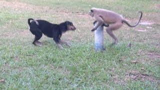 Download Dog vs Monkey LIVE Animal Instincts Video