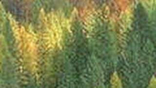 Download Pratiques de récolte en forêt boréale Video
