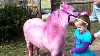 Download Pink Pony Surprise for Rosie Dale's 5th Happy Birthday Party Bronies UPDATE Video