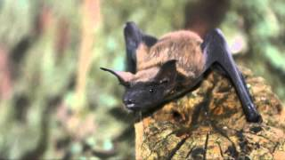 Download Fun Facts About Bats Video