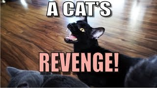 Download Talking Kitty Cat 55 - A Cat's Revenge Video