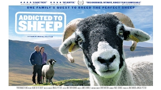 Download Addicted to Sheep - Trailer Video
