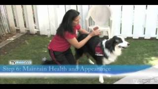 Download How To Prepare A Dog For Therapy Dog Training Video