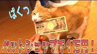 Download ペットショップで猫グッズ1万円分買うまで帰れまてん!やってみた Video