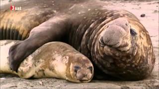 Download Homosexualität im Tierreich 1/4 Video