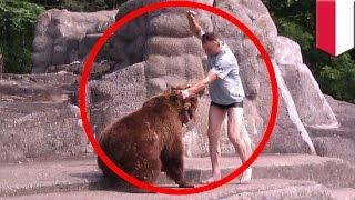 Download Idiota z Polski uderza niedźwiedzia w głowę....i przeżywa! Video