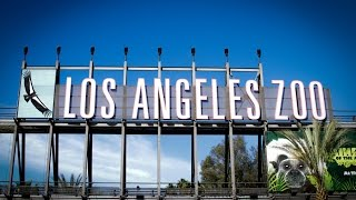 Download The Los Angeles Zoo Video