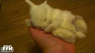 Download Oooh, wie niedlich: Kleiner Hase träumt vor sich hin... Video