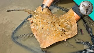 Download Crazy Stingray Catch! Video