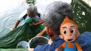 Download Ikan Cae, Si Mulut Kuat Penyedot Lumut | Si Otan (13/02/19) Part 1 Video