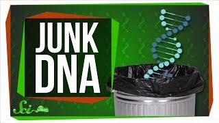 Download How Much Junk Is in Your DNA Trunk? Video