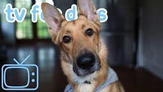 Download Relax Your Dog TV - Calming Virtual Walk Therapy for Pets and Humans - Used by 10 million 🐶🥰 Video
