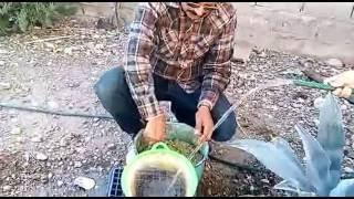 Download tamales de ceniza a mi estilo (corundas) Video