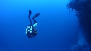 Download 2014 Cayman Islands Deep Reef Expedition Video