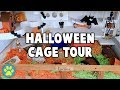 Download Halloween Hamster Cage Tour 2017 Video