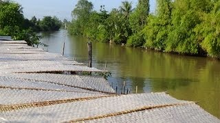 Download Vietnam daily life, daily life in Vietnam, Vietnam countryside, Vietnam landscape Video