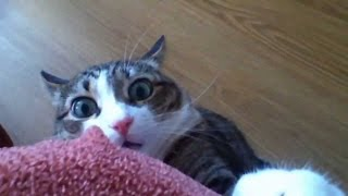 Download Funny Stalking Cat Video Compilation (2013) Video