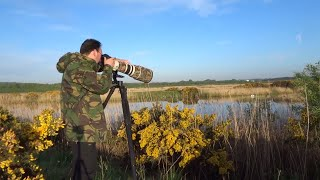 Download Wildlife Photography: How to Not Photograph Warblers Video
