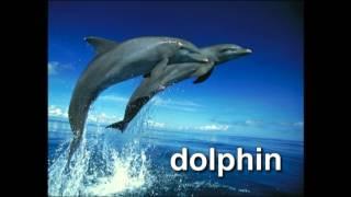 Download World Animal Adventure, Part 2 | Animal Videos for Kids | Baby Einstein Video