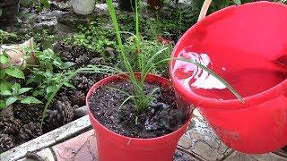 Download Июль, пересаживаю растения. Мои новые растения. Video