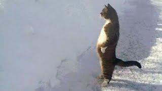 Download Quand les Chats ont un Comportement Humain Video