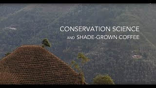 Download Conservation Science: Amanda Rodewald Discusses Shade Grown Coffee Video