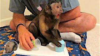 Download Monkey Flarp! Noise Putty! Video
