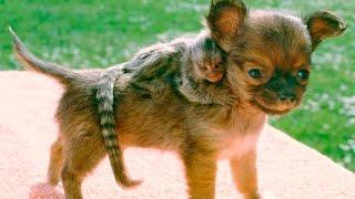 Download Top 10 Best Animal Friends Compilation Video