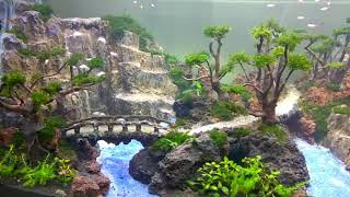 Download Amazing Aquascape by Khenzo Alviano. Its not all about Discus... Enjoy Video