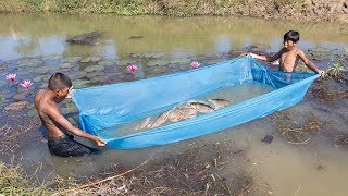 Download Unique Fish Trapping - Amazing Way of Catching Fish Using Mosquito Net | Cambo Trap Video