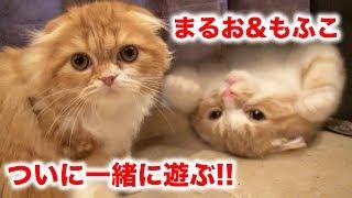 Download 【感動】まるお & もふこがついに一緒に遊びます!【初めて】 Video