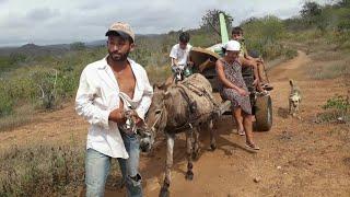 Download Seu Ciço leva sua mudança na carroça de burro com sua família😢😢😥 Video