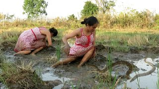Download The smart woman fishing on the rice field near her village.Fishing by hand-How to fishing(119) Video