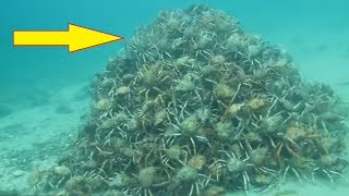 Download Divers Think Everything Is Normal In The Water Until They Spot This Pile Of Nightmares Video