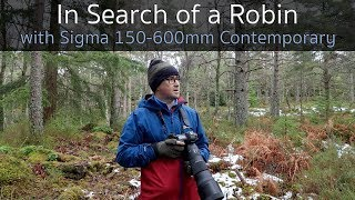 Download Searching for a Robin - Wildlife Photography with the Sigma 150-600mm Contemporary Lens Video